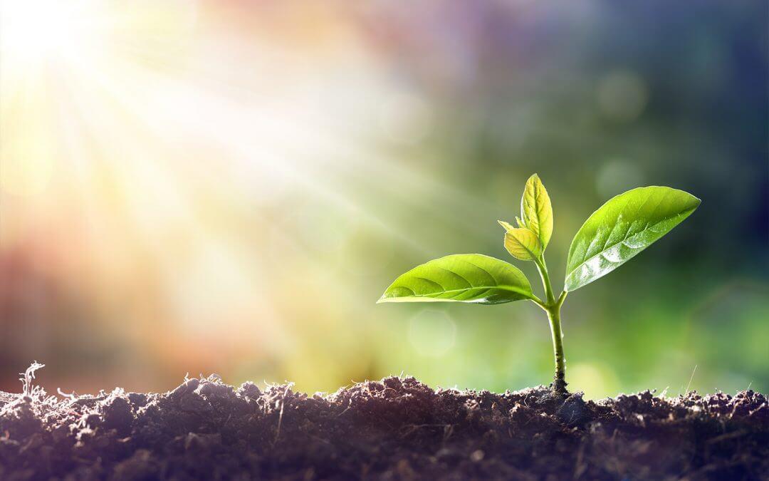 Plattform-basierte digitale Ökosysteme als Chance für Hidden Champions